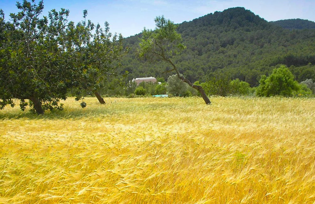 Ibiza country estates fincas and agritourismo properties for sale